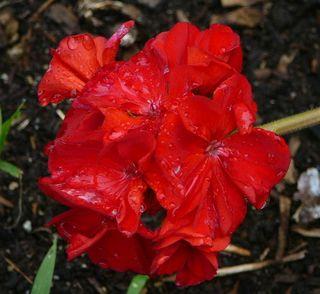Sunday Blooms by Joy Pedersen