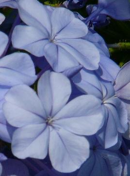 Blue Emersion by Joy Pedersen