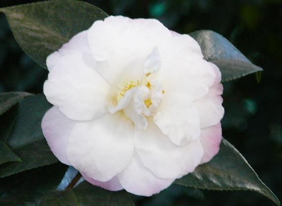 Flower by Joy Pedersen